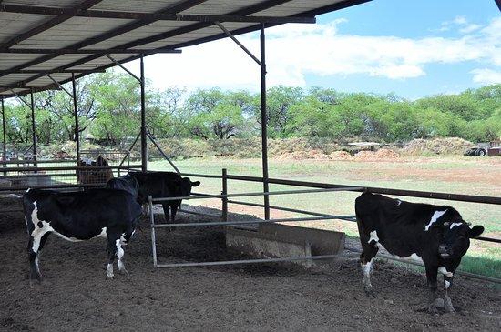 Naked cow dairy honolulu