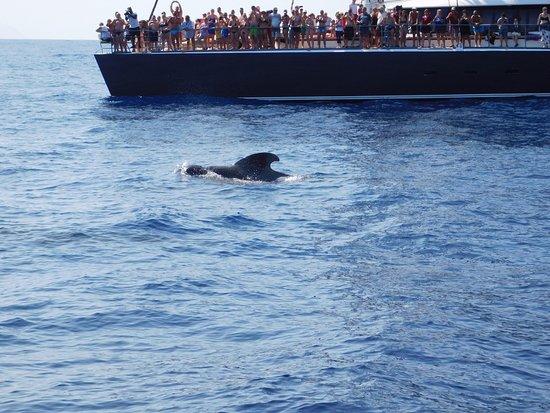 Freebird Catamarans: wieloryby :)