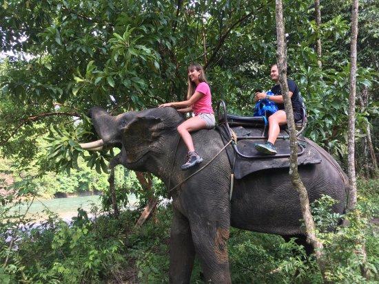 Washing Elephants in Tangkahan: preciosa experiencia