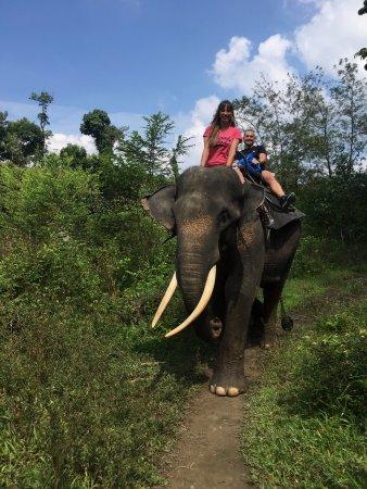 Washing Elephants in Tangkahan: paseo con Theo