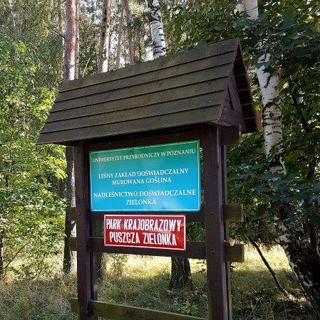 Murowana Goslina, Poland: Park Krajobrazowy Puszcza Zielonka