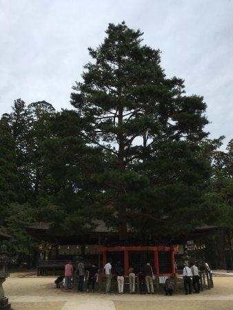 חוות דעת על Koyasan Danjo Garan - Koya-cho, יפן - TripAdvisor