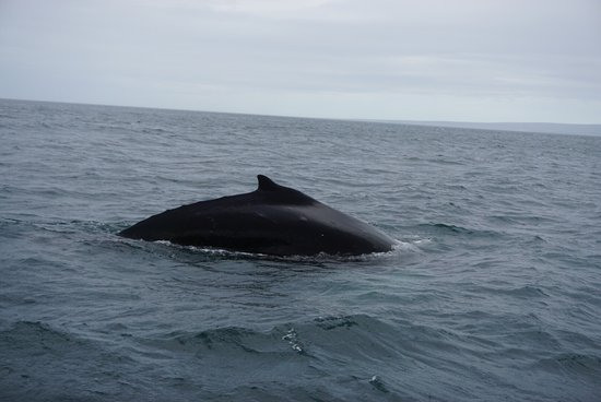 Husavik, Island: photo1.jpg
