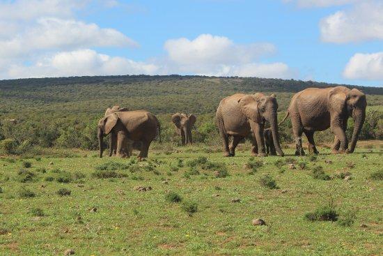 Table View, Sudafrica: Addo-Elephant-Park