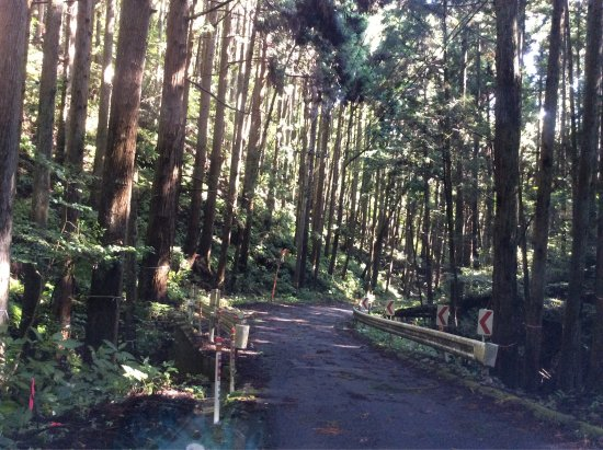 Ibaraki Prefecture, Japan: トトロに会いました。