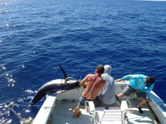 The big ta do picture of deep sea fishing kauai kapaa for Fishing in kauai