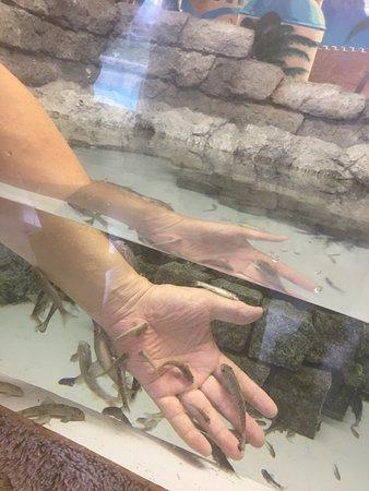 皮膚の垢を食べる魚 魚津水族館 - Photo de Uozu Aquarium - Tripadvisor
