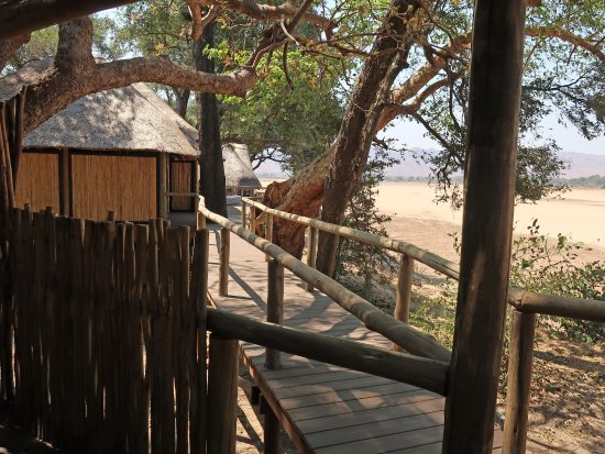 Chamilandu Bushcamp - The Bushcamp Company: From new viewing area back to the room