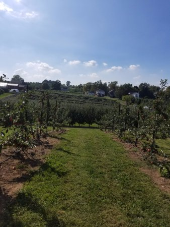 South Glastonbury, CT: Orchard