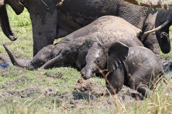 Lower Zambezi National Park, Zambia: Fun in the mud just outside our room