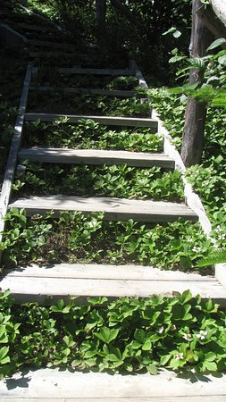 Norris Point, Canada: set of stairs on trail