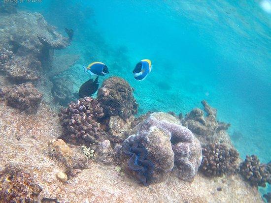 Snorkel en el arrecife de coral