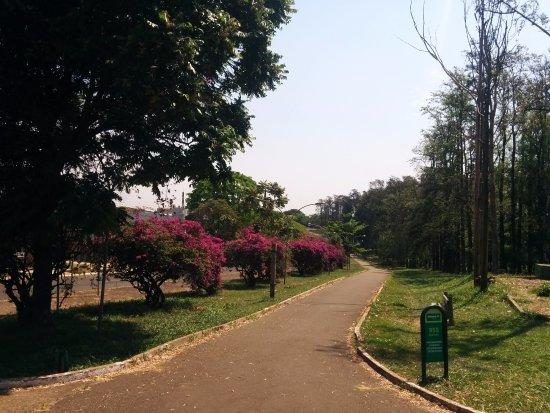 Maringa, PR: Vista da parte externa do Bosque das Grevíleas