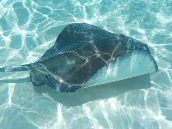 جورج تاون, جراند كايمان: Stingray Island