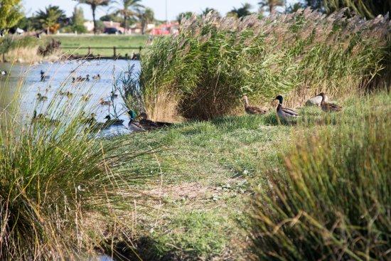 Saint-Cyprien, France: Les nombreux bassins ornithologiques accueillent une faune très diverse.