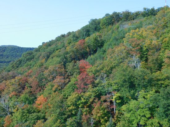 Agawa Canyon Tour Train: fall colors just beginning to appear