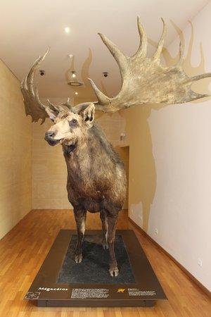 Musée national de la Préhistoire : Cervo