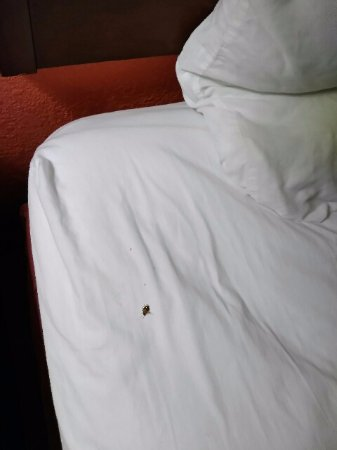 Motel 6 Opelika: I had to kill this live roach that woke me up in order to get a photo. Sad ! Just Sad !