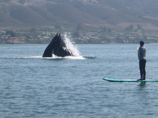 ‪‪Avila Beach‬, كاليفورنيا: close up with a humpback whale‬
