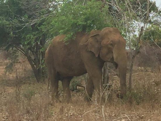 Udawalawe National Park: photo1.jpg