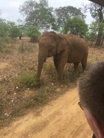 Udawalawe National Park: photo3.jpg