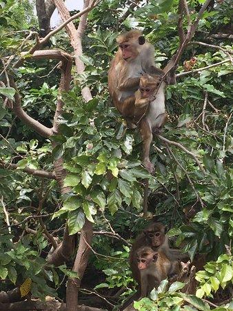 Udawalawe National Park: photo4.jpg