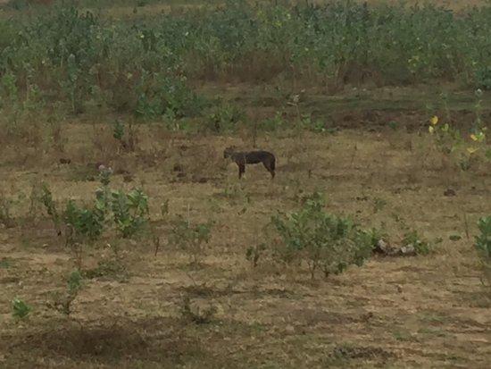 Udawalawe National Park: photo5.jpg