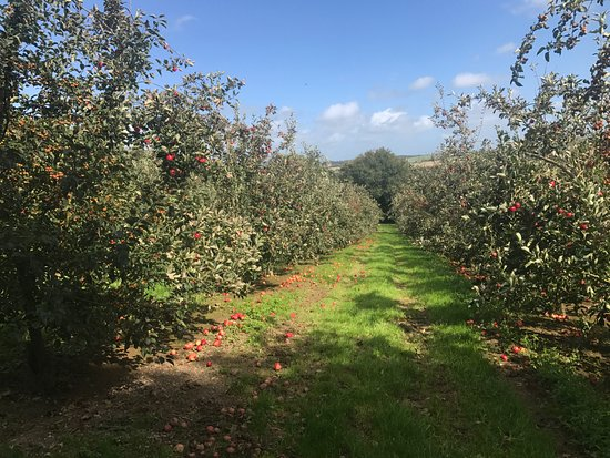 Truro, UK: Orchard