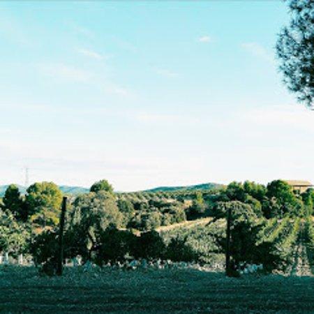 Mas de las Matas, สเปน: Los viñedos y la bodega Tierramaestrazgo