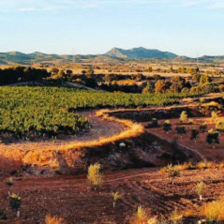 Mas de las Matas, สเปน: Viñedos Tierramaestrazgo y monte Tolocha al fondo