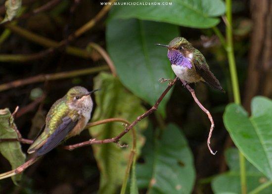 San Gerardo de Dota, Costa Rica: Bastantes colibries en el jardin