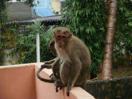 Koh Kong, Kambodża: Animals welcome @pizza23.......