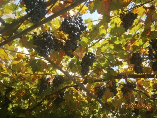 Banjol, Хорватия: Weinlaube auf der Terasse