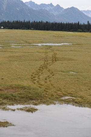 Alaska Bear Adventures: Our path back to the airplane.