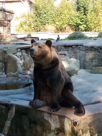Калининградский зоопарк: IMG_20170916_153042_large.jpg