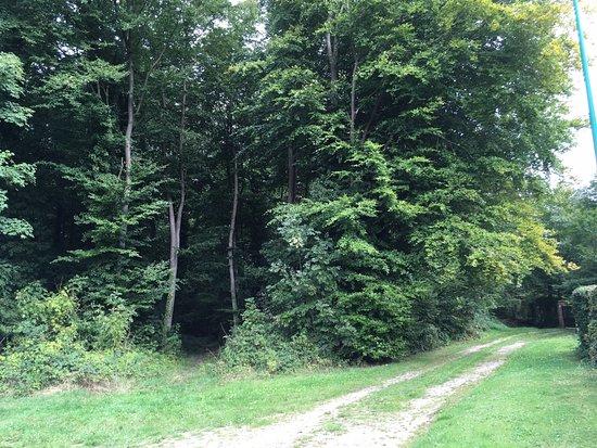 Sentier de randonnée balisé en forêt de Lyons, à Charleval