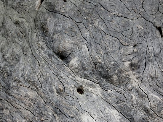 Port McNeill, Kanada: Close up of the burl