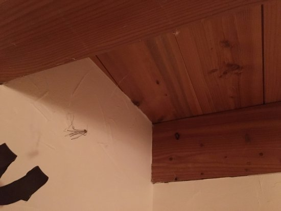 Oz en Oisans, France : spinnenweb plafond