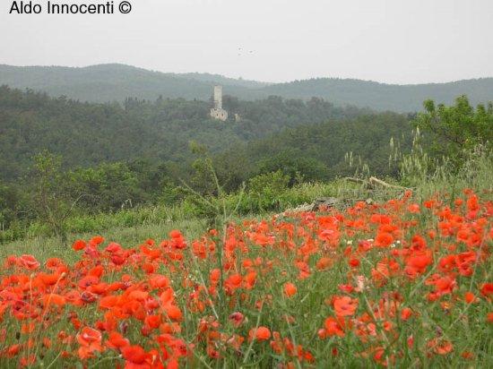 Monteroni d'Arbia, Italy: Pieve di Corsano: il bel paesaggio intorno alla pieve 1