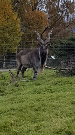 Kingussie, UK: Highland Wildlife Park