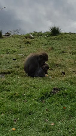 Kingussie, UK: Mother and Baby!