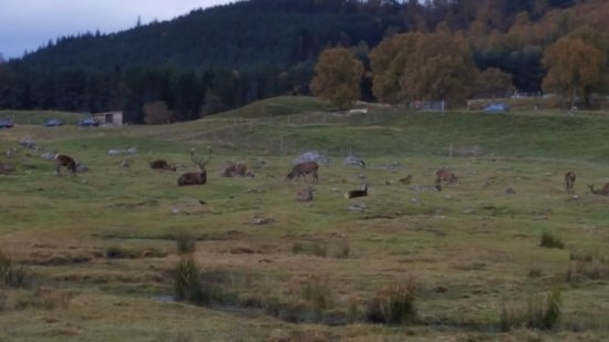 Kingussie, UK: Fabulous scenery
