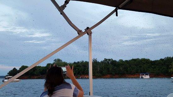 Leesville, Carolina del Sur: Purple Martins on Bomb Island