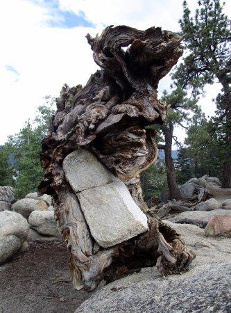 Castle Rock Trail: rock-tree marriage