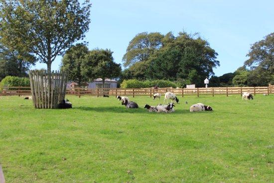 St Austell, UK: Farmyard
