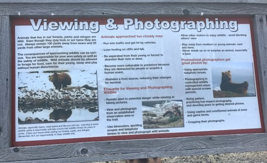 Bozeman, MT: Viewing & Photographing Bears