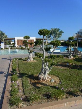 Topiary On What Look Like Giant Bonsai Trees Picture Of Tui Blue Palazzo Del Mare Marmari Tripadvisor
