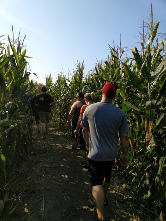 Oswego, IL: The corn maze