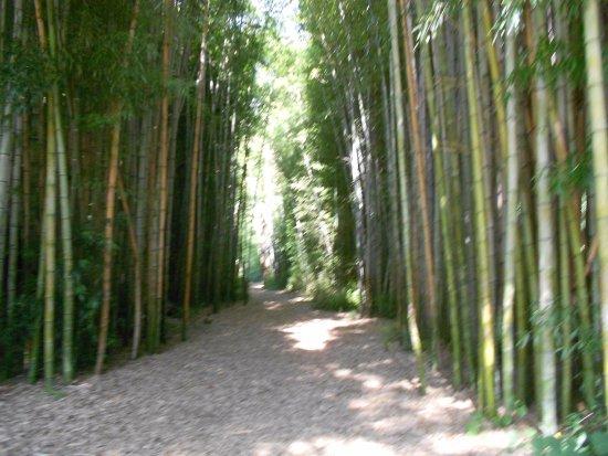 Oconaluftee Islands Park: bamboo