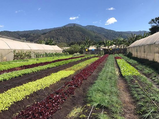 Caoba Farms